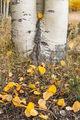 fall, color, foliage