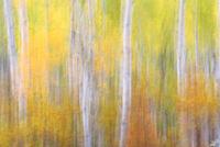 Natural Abstractions