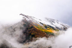 Fall, autumn, foliage, winter, snow