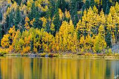 Fall, autumn, foliage