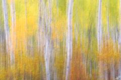 Fall, autumn, foliage, abstract