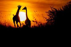 Kenyan Dreams home