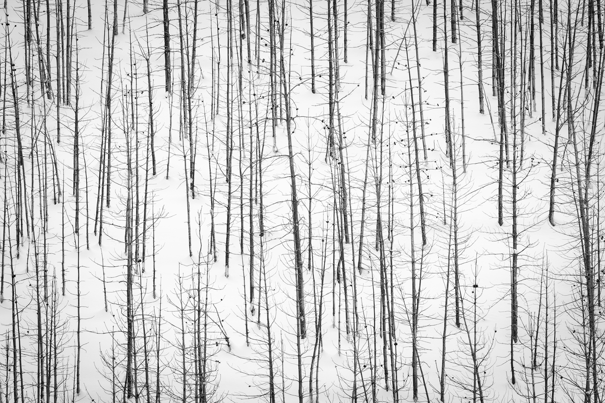 winter, abstract, black, white