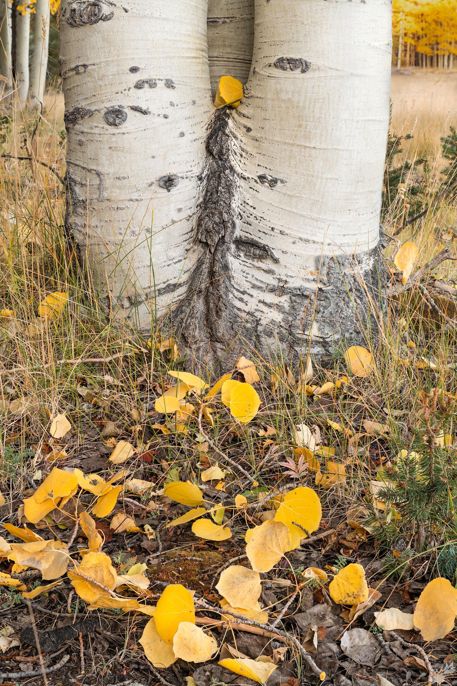 fall, color, foliage, photo