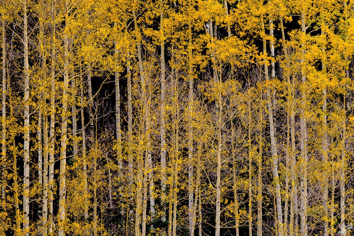 Fall, autumn, foliage, photo