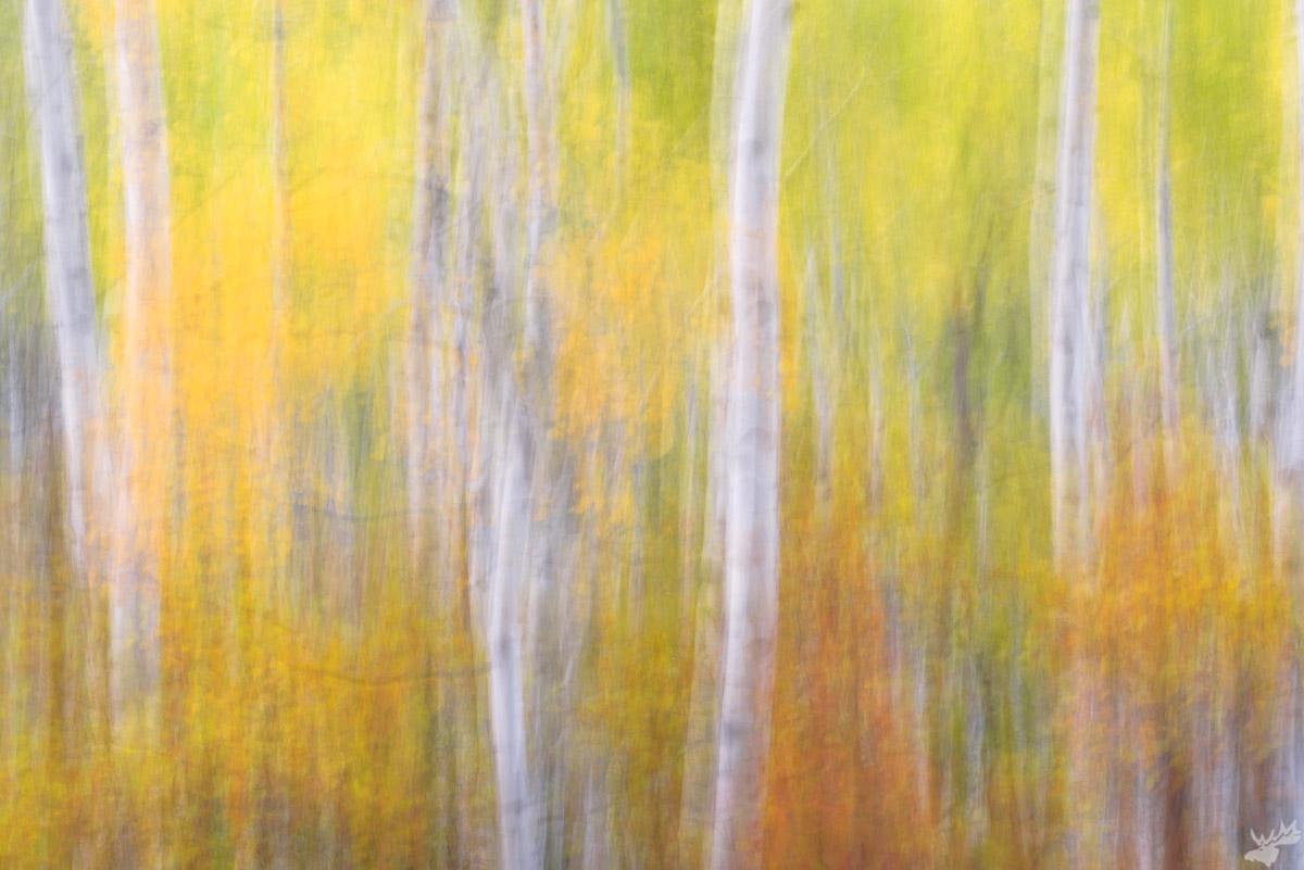 Fall, autumn, foliage, abstract, photo