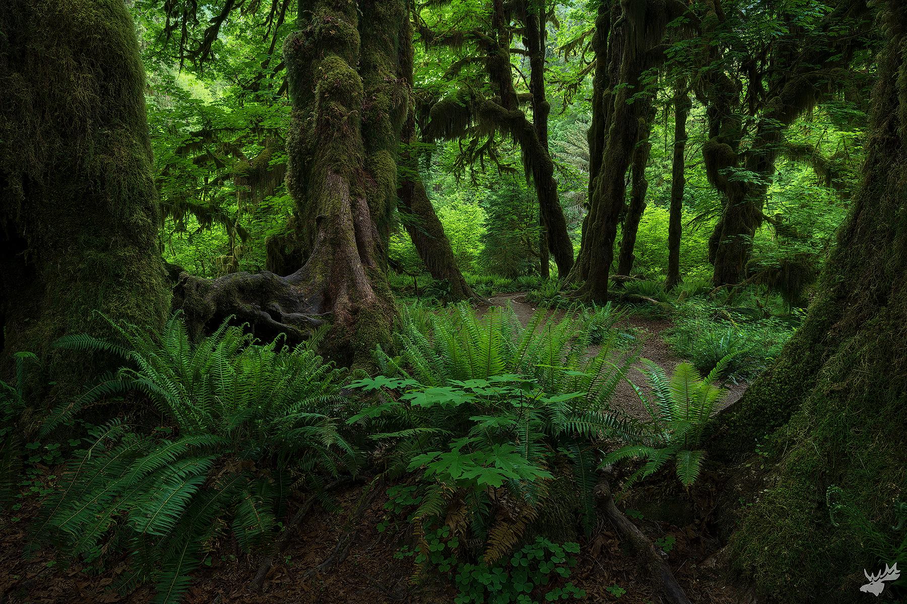 rainforest, green, forest
