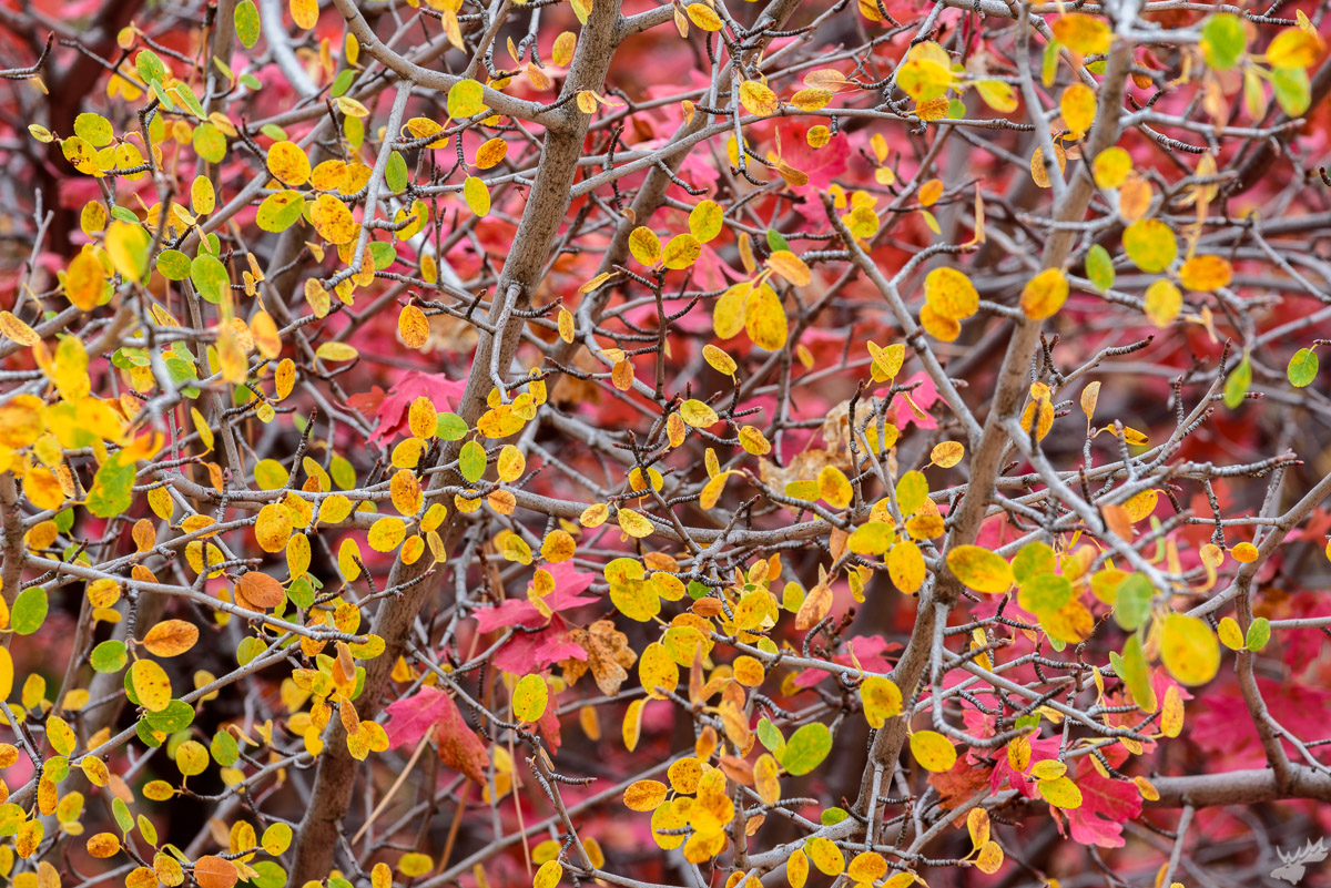 autumn, fall color, foliage, american west, fall, trees
