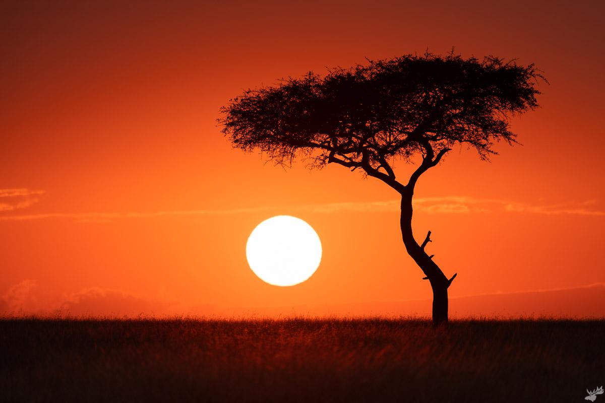 wildlife, sunrise, tree, africa
