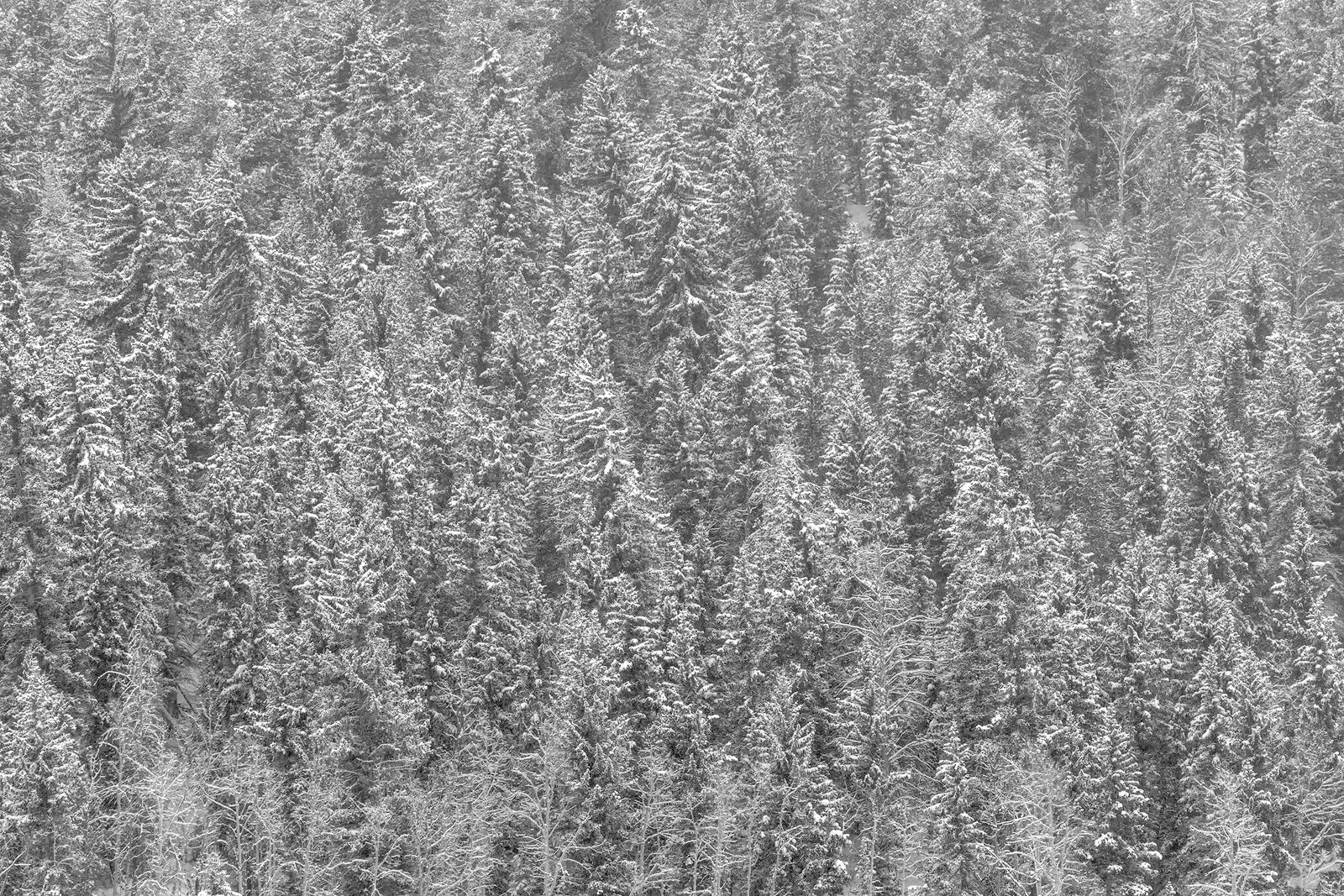 abstract, snow, trees