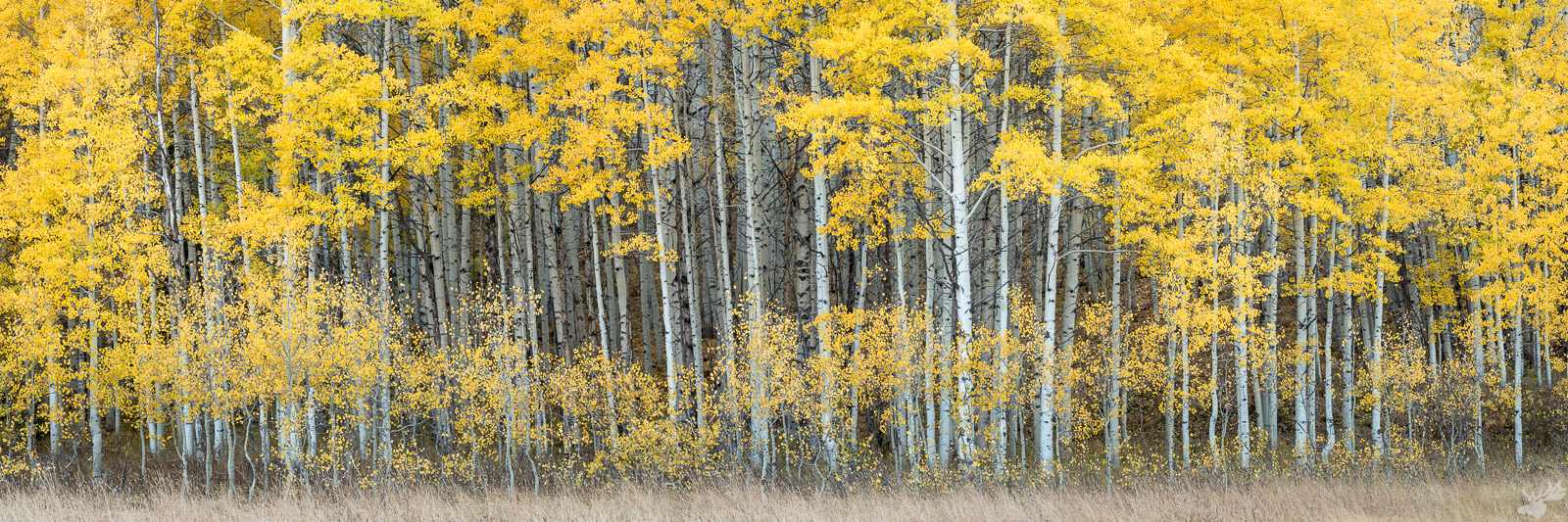autumn, fall color, foliage, american west, photo