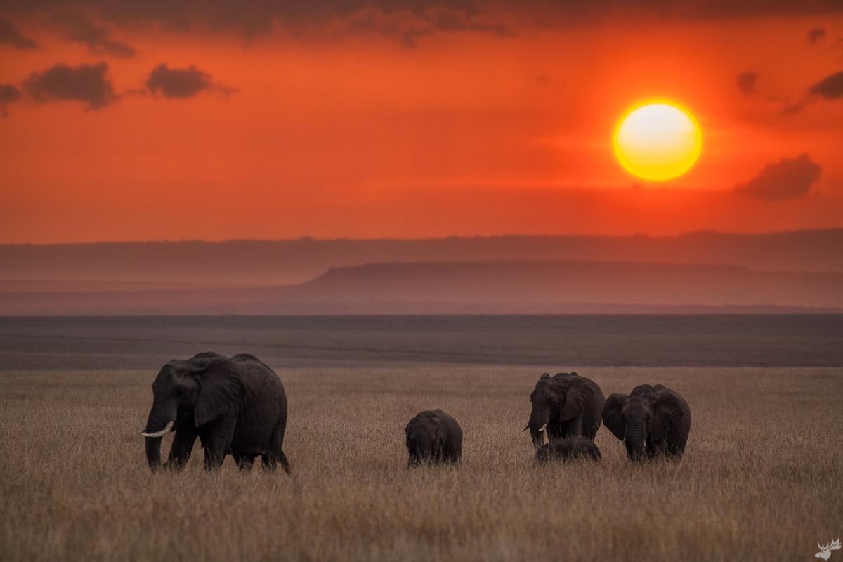 wildlife, sunset, elephant, africa