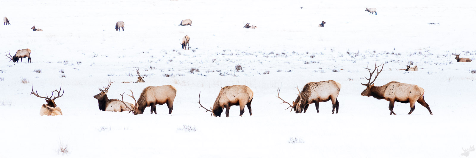 wildlife, american west, photo